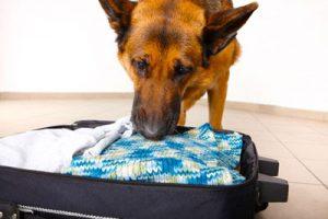 vacation_rental_pet_packing